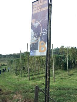 Plantação do lúpulo tem parceria da Baden Baden